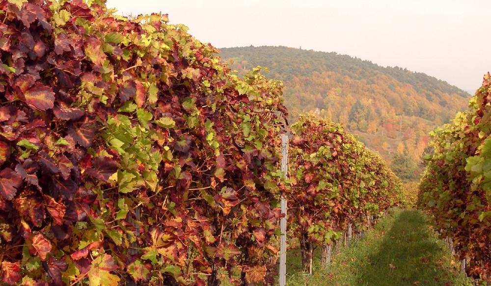 Die Farben der Pfalz Ende Oktober 3