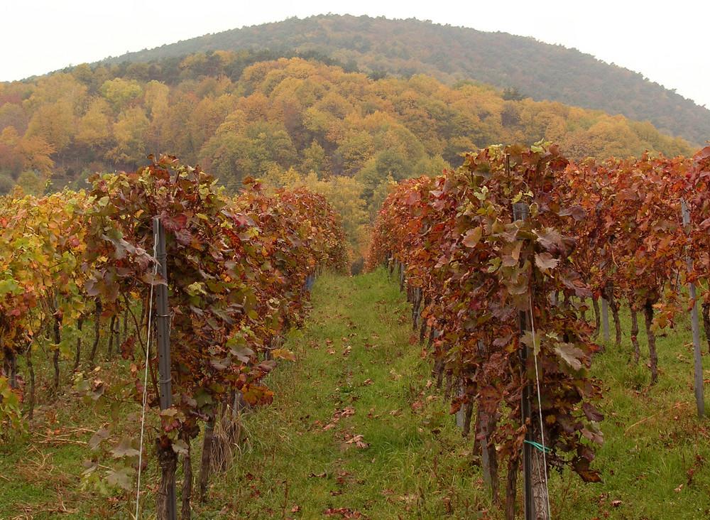 Die Farben der Pfalz im Oktober 2