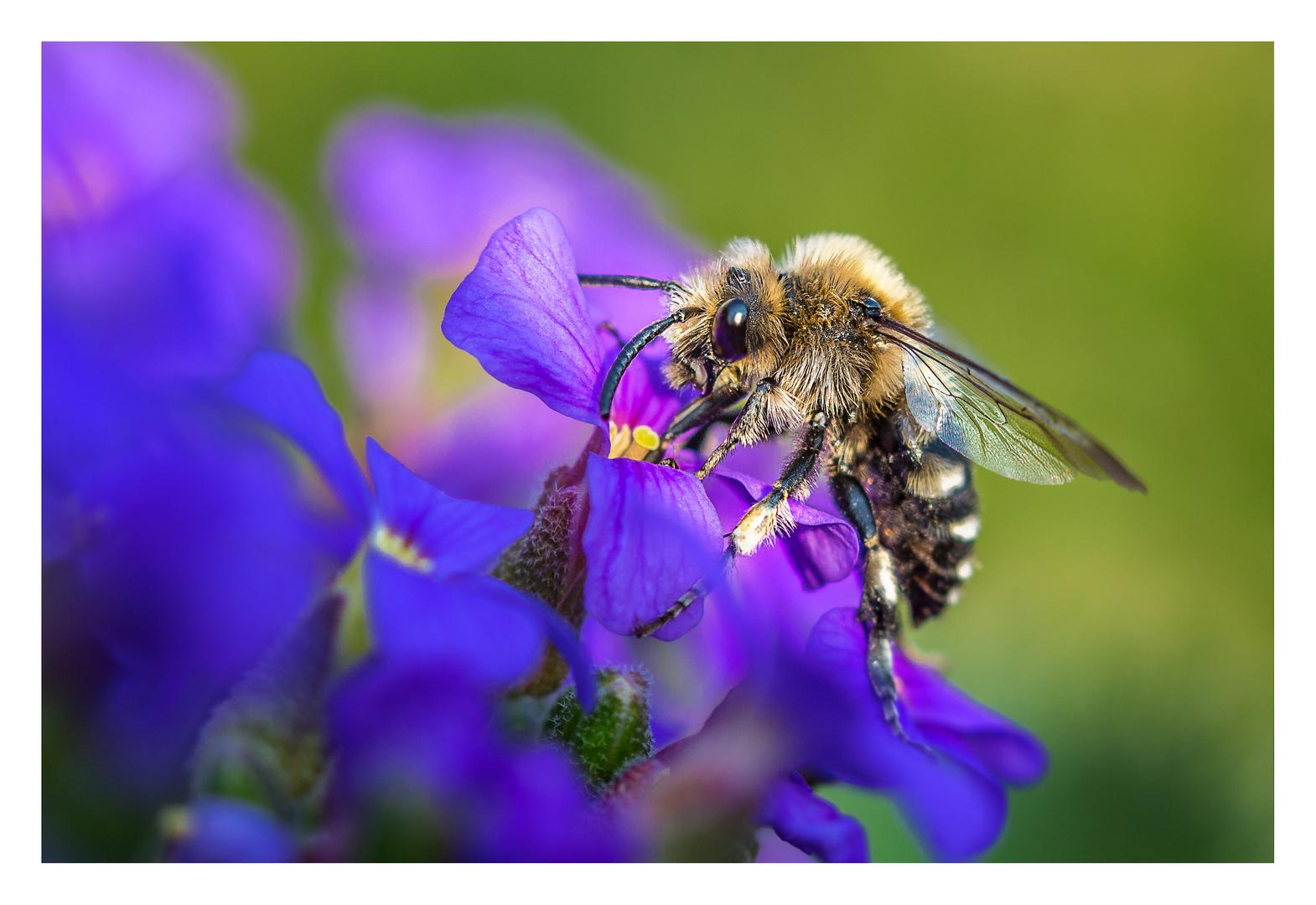 . . . die Farben des Frühlings