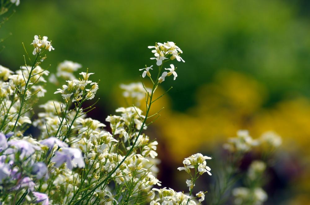 Die Farben des Frühlings im Botanischen Garten
