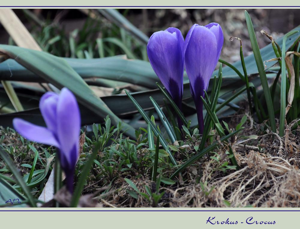 """""""""""Die Farben des Frühlings""""""""(5)"""
