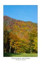 Die Farben des Herbst sind einfach nur schön!