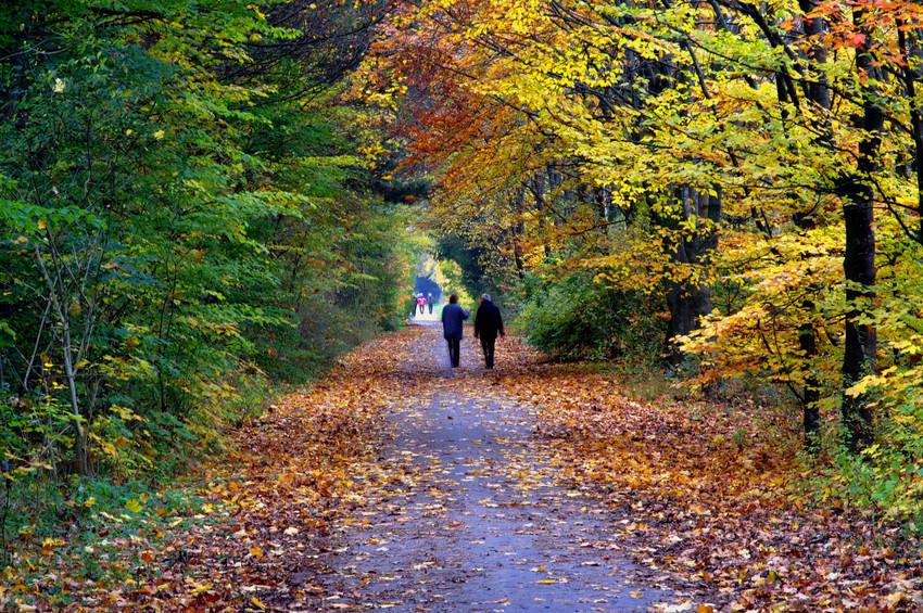 Die Farben des Herbstes 2