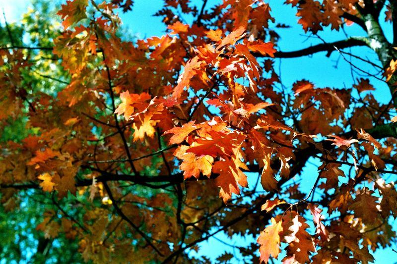 Die Farben des Herbstes.....