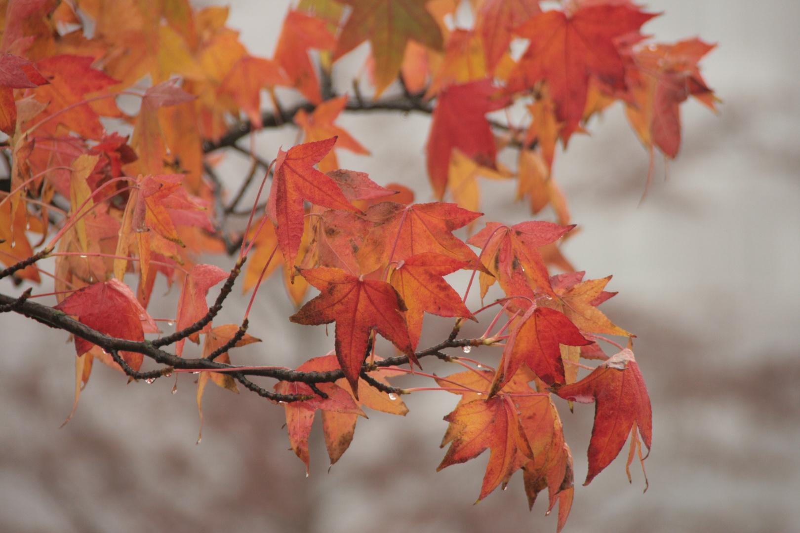 ... die Farben des Herbstes ...