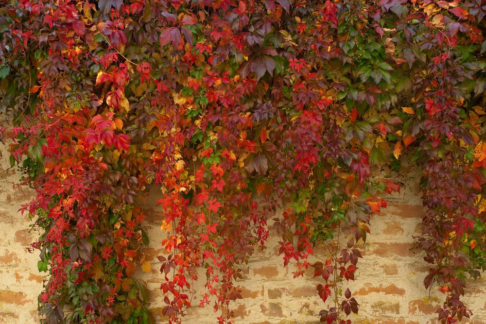 Die Farben des Herbstes