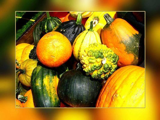 ... die Farben des Herbstes