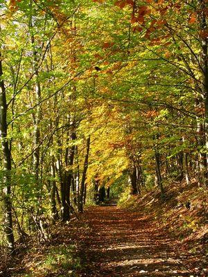 Die Farben des Herbstes fassen.