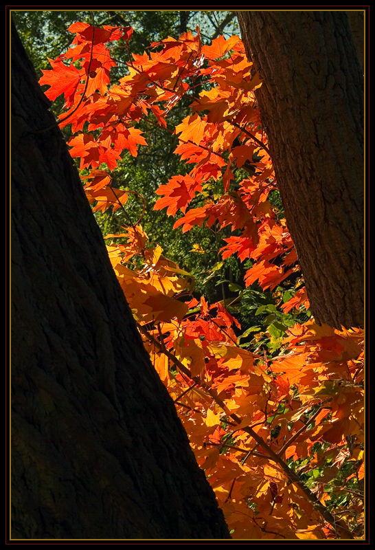 Die Farben des Herbstes III