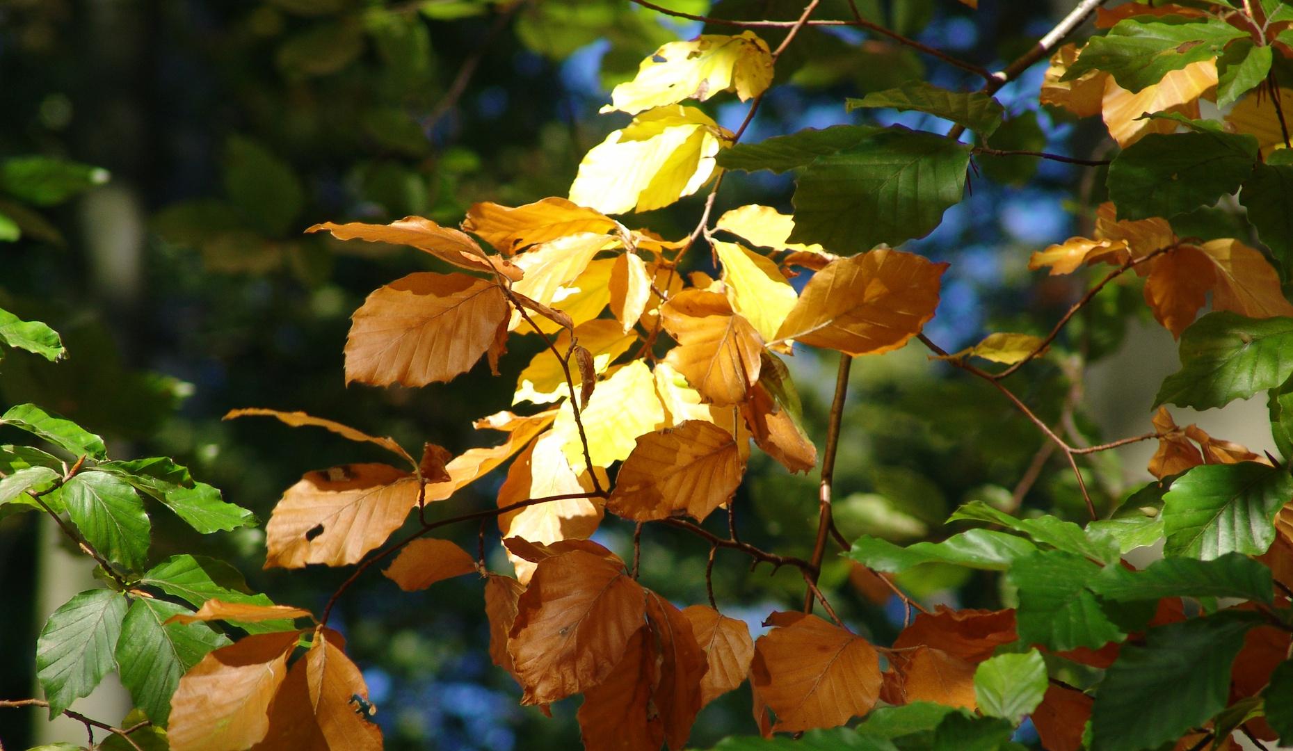 die Farben des Laubes im Herbst...