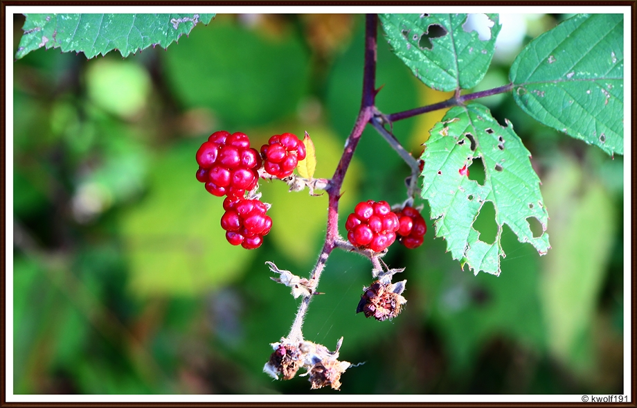 Die Farben des Oktobers (3)