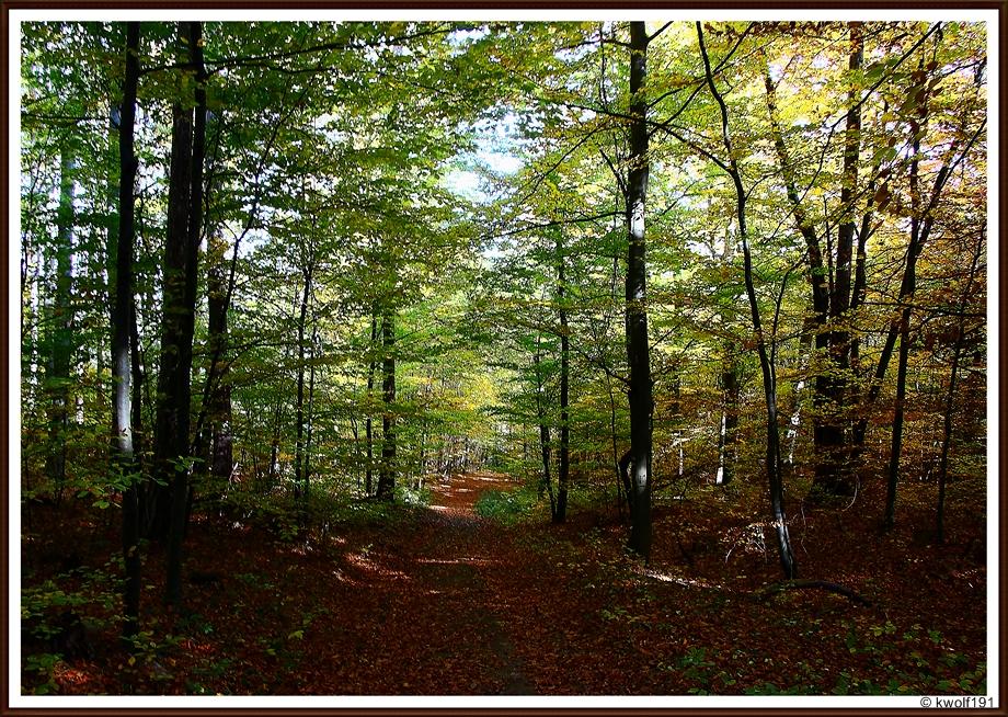 Die Farben des Oktobers (4)