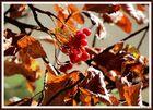Die Farben des Oktobers (5)