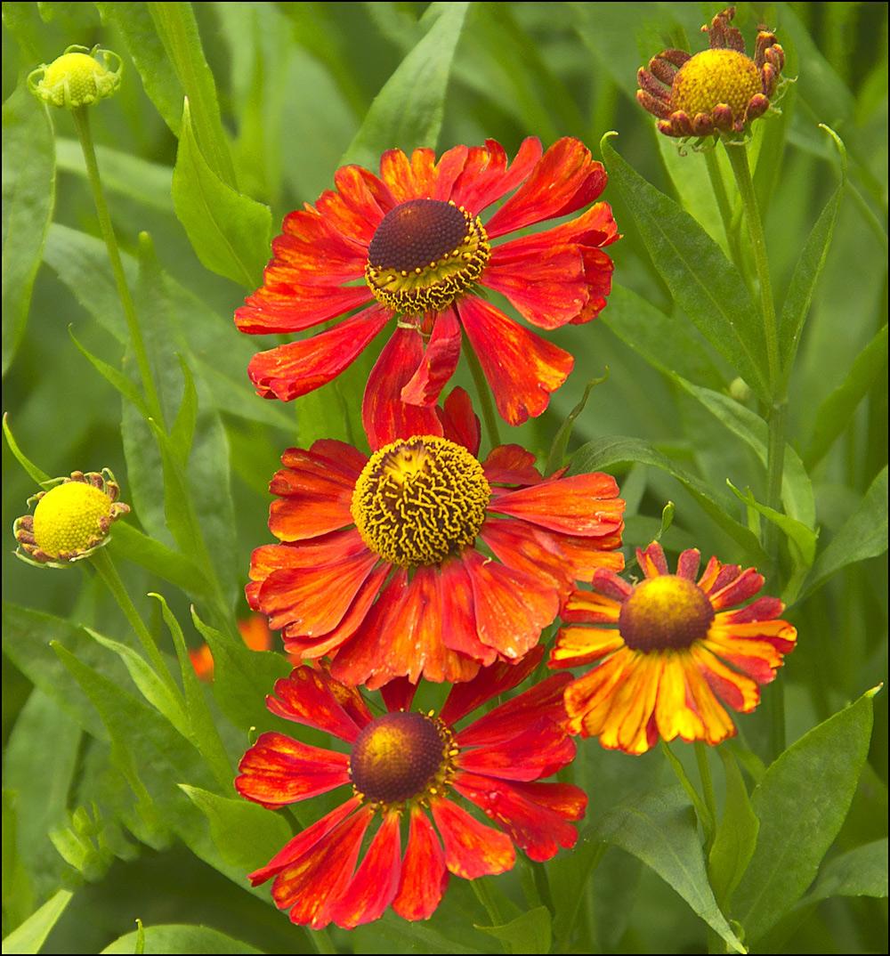 Die Farben des Sommers...