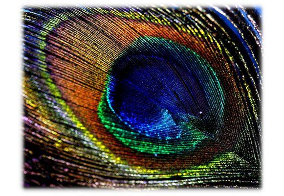 Die Farben eines Pfauenauges