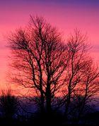 Die Farben erobern den Tag