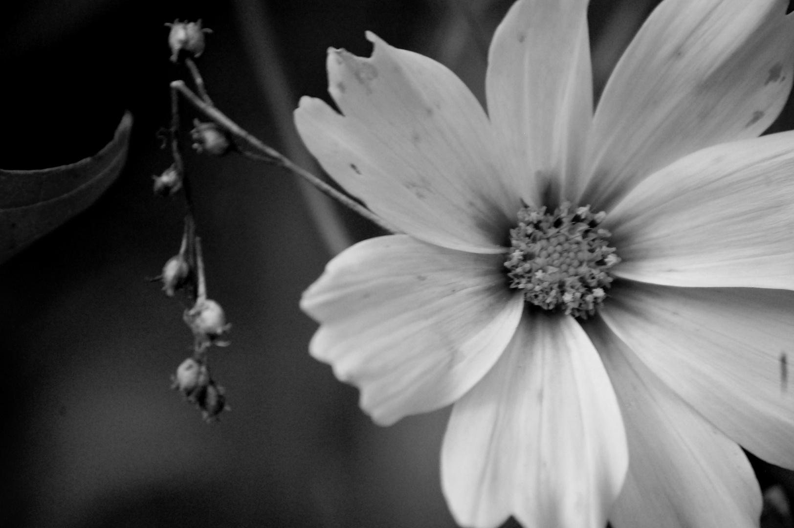 Die farbenlose Schönheit der Blume