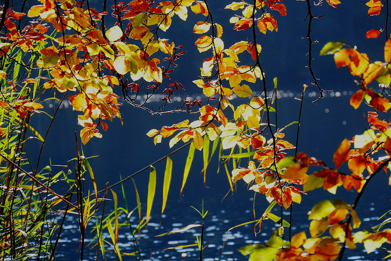 Die Farbtupfer des Herbstes..