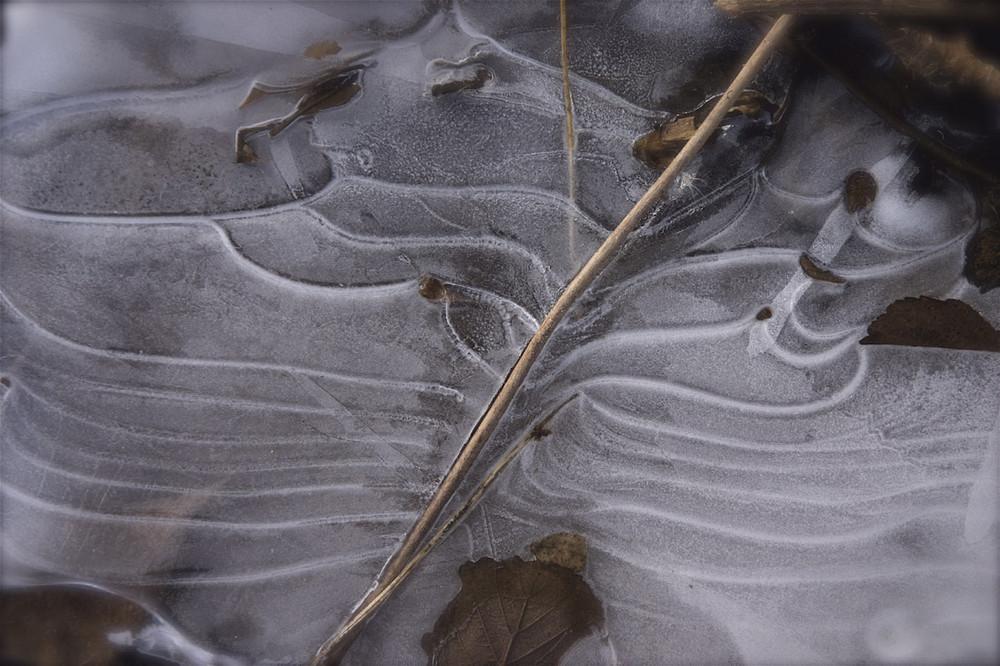 Die Feder aus Eis
