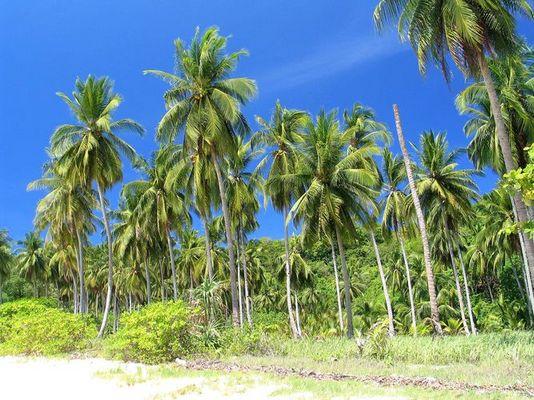 Die fehlende Palme auf Phi Phi - Loh Moo Dee Beach