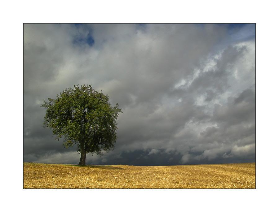 Die Felder sind leer ....