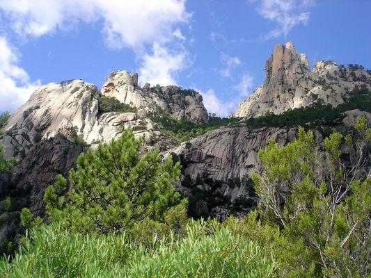 Die Felsenwälder