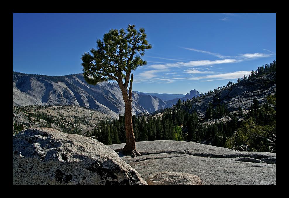 die Felsspalte - der Baum - die Aussicht