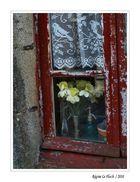 Die Fenster von Locronan