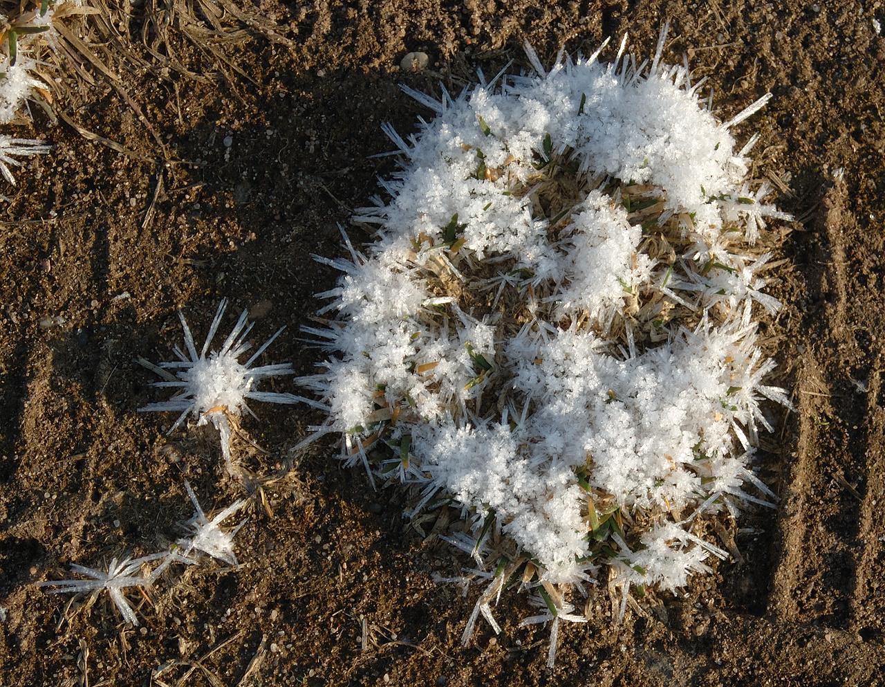 Die filigranen Wunderweke der Natur