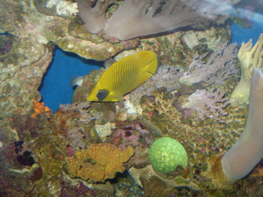 Die Fischwelt