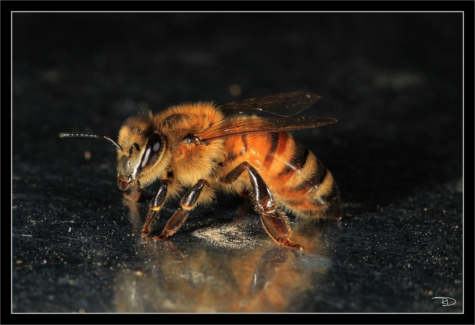 die fleissige Biene auf abwegen
