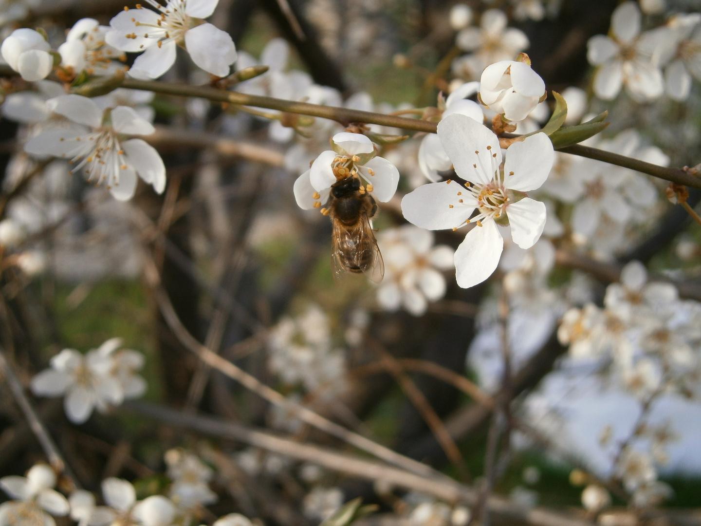 die fleissigen bienen