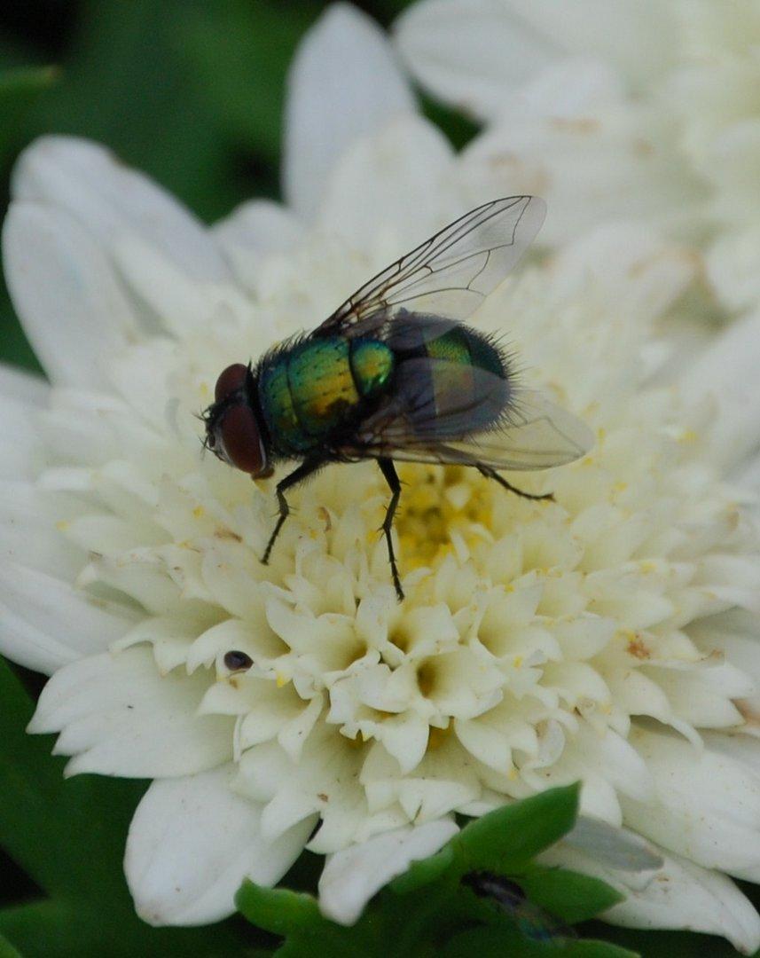 ...die Fliege 2...