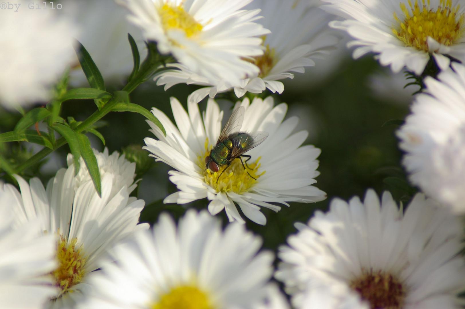 Die Fliege 2