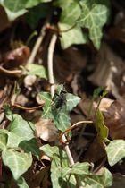 die Fliege im Wald