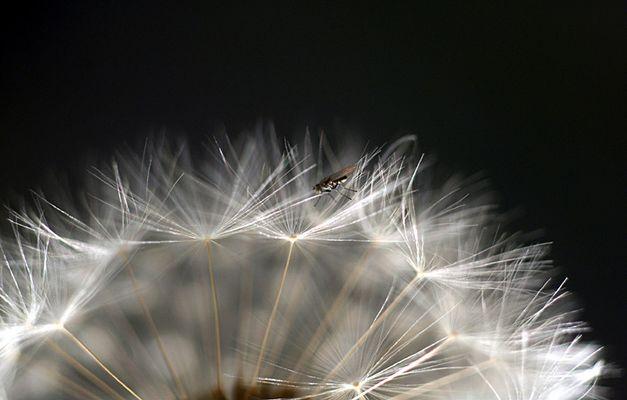 Die Fliege im weißen Wald