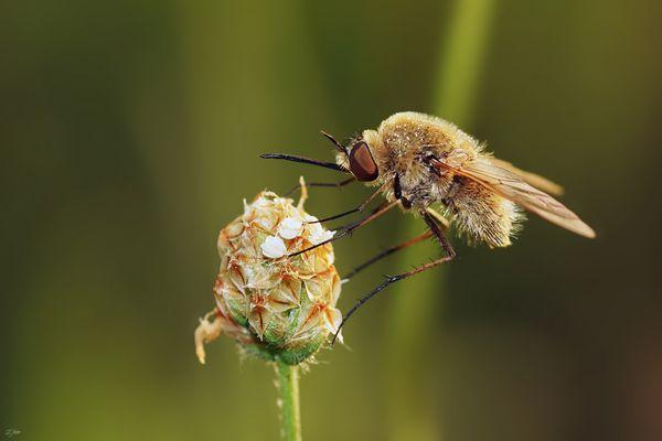Die Fliege mit dem Degen ;-)