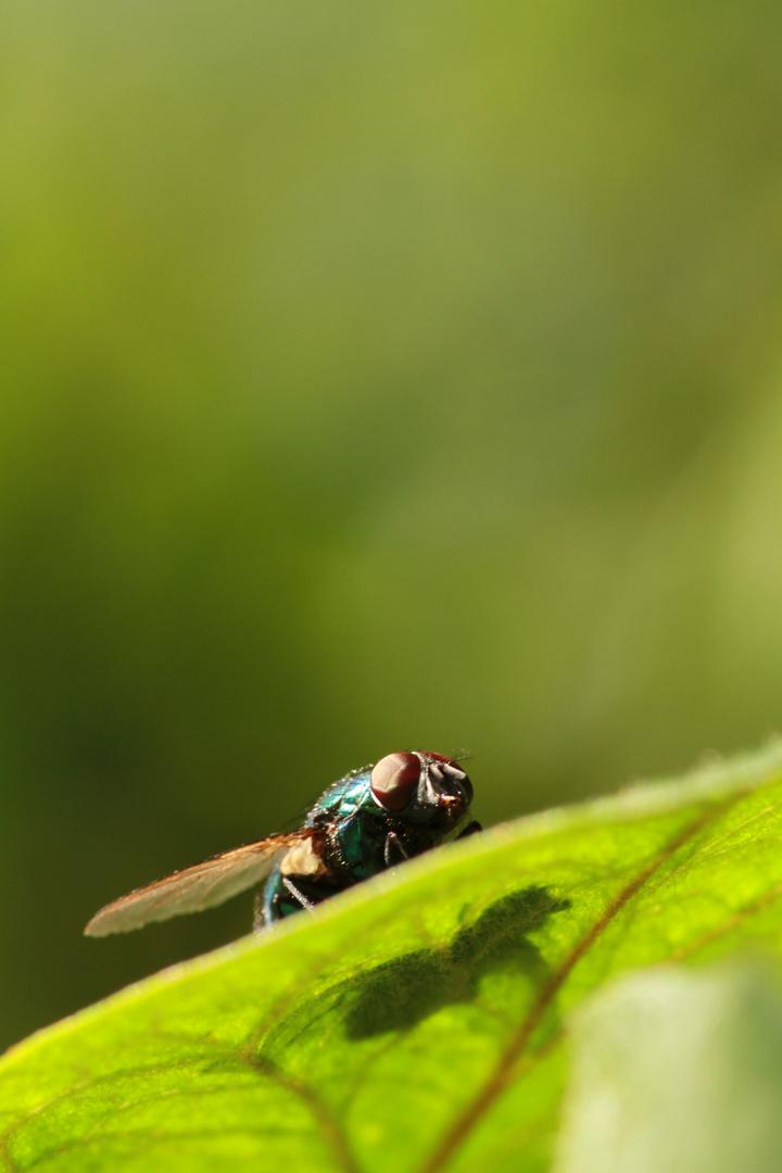Die Fliege Teil1