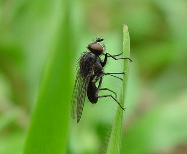 Die Fliege und das Grün !