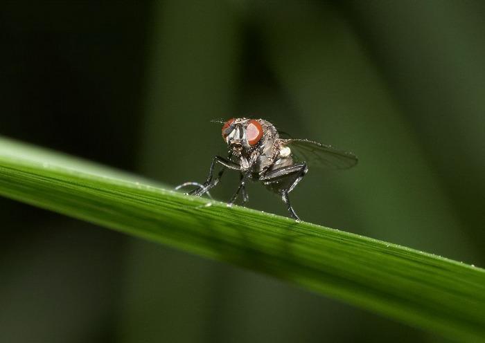 Die Fliege....erstes Macro, bitte Feedback