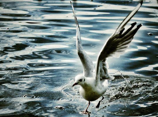 Die Flucht...aus dem Fokus