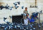 Die Frau mit den Tauben