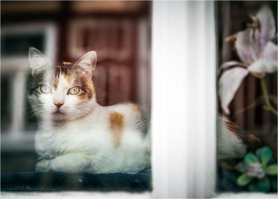 die fremde Katze