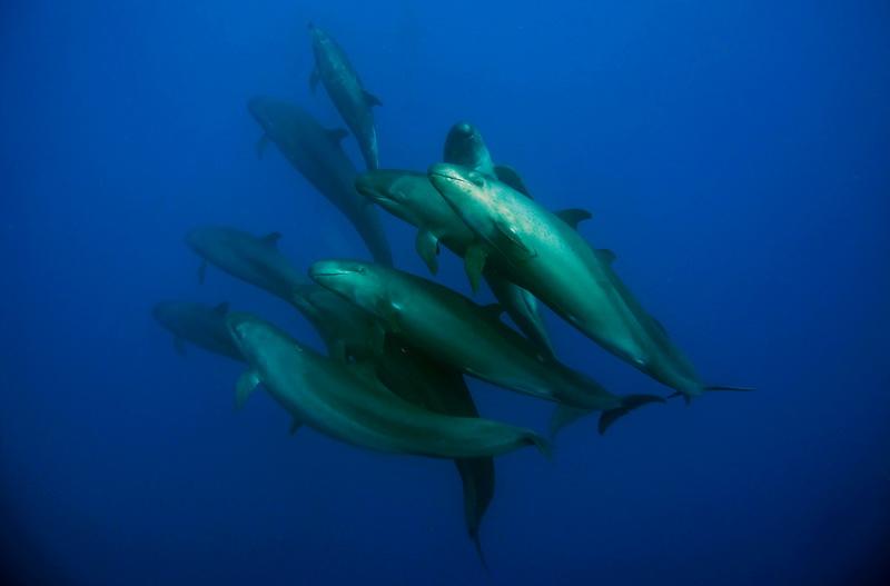 Die freundlichsten Mantas und Delfine weltweit im Socorro Archipel, Mexiko