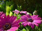 Die frischen Farben des Frühlings