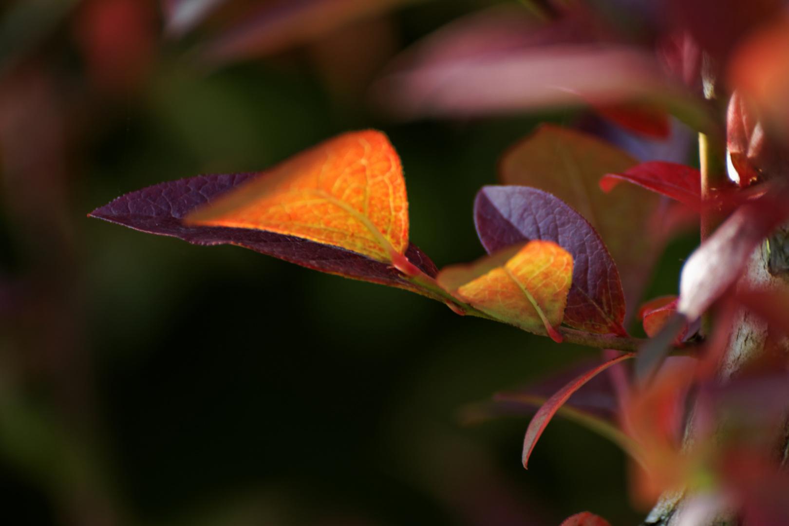 Die frischen Herbstfarben