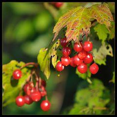 Die Früchte des Herbstes