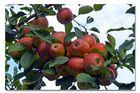 Die Früchte des Sommers