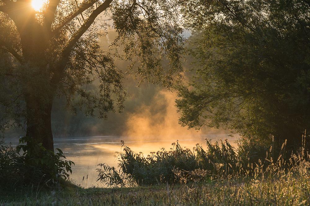Die frühe Sonne