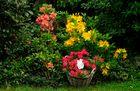 Die Frühlings-Pfingstfarben im Garten ...